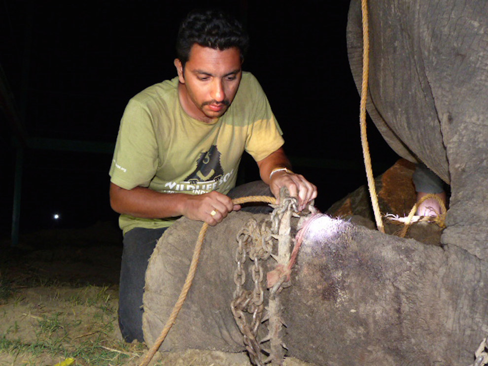 Après 50 années de torture, cet éléphant pleure à sa libération