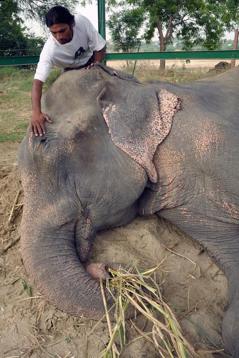 02-elefante