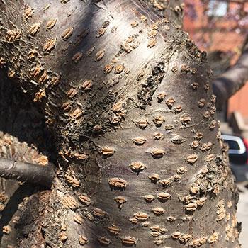 arbre-3