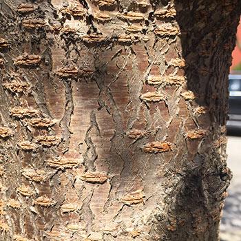 arbre-4