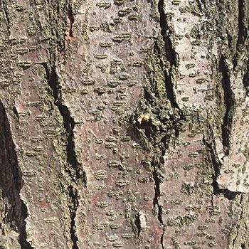 arbre-6